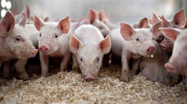 Группировка «ДНР» запретила завозить из Украины мясо, ветпрепараты, медикаменты и корма для животных