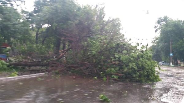 В Горловке непогода повалила деревья