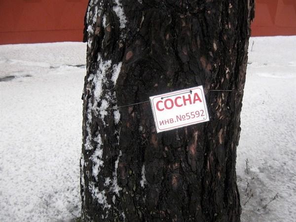 В Горловке на деревьях ставят инвентарные номера (ФОТОФАКТ)