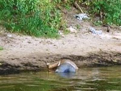 Горловское море превращается в братскую могилу: возле берега обнаружили еще одного застреленного мужчину в наручниках