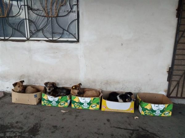 На Никитовском рынке в Горловке для бездомных собак придумали укрытие (ФОТОФАКТ)