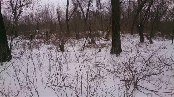 Жители горловского поселка Гольмовский пилят парк на дрова