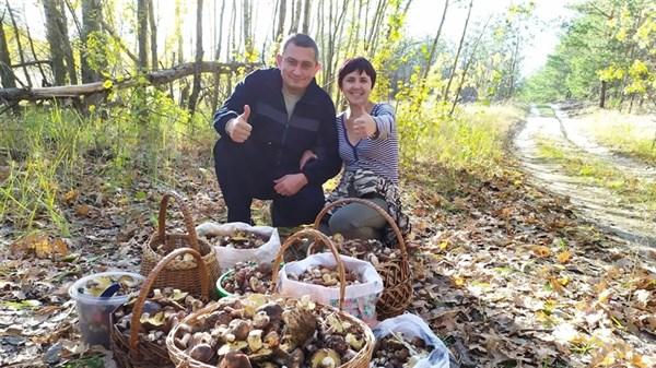 Зонтики, маслята, печерица: что стоит знать про грибы, как их отличить и где собирать. Горловчанин поделился грибным опытом