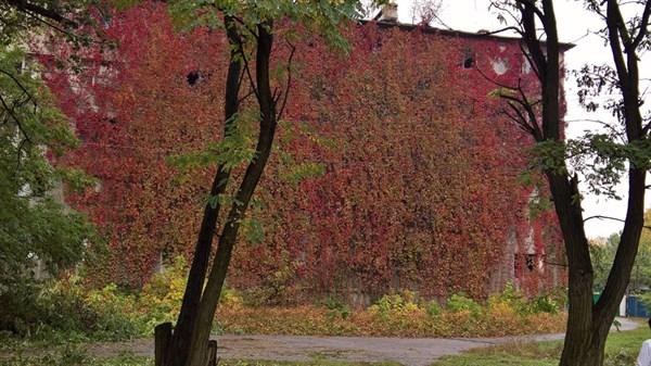 Опубликовано фото пятиэтажки в Горловке, которая за три года почти полностью заросла лозой