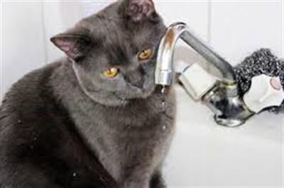 Горловчане жалуются на частое отсутствие воды и на запах дуста из крана