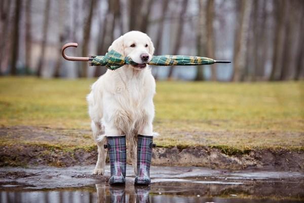 Собираемся на прогулку с собакой