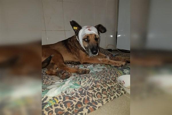 Пес, которого в Горловке били ножом и выбросили с 6 этажа, пошел на поправку