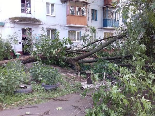 Повалены деревья, разбиты стекла, остановлена работа подстанций - последствия непогоды в Горловке