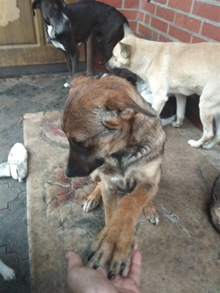 Горловский приют для бездомных животных очень нуждается в помощи: нужна еда, средства и плита для печки