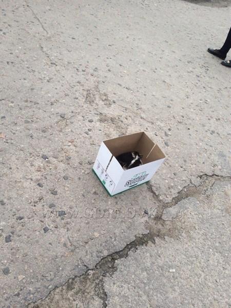 На остановку общественного транспорта в Горловке подбросили коробку с котятами (ФОТОФАКТ)