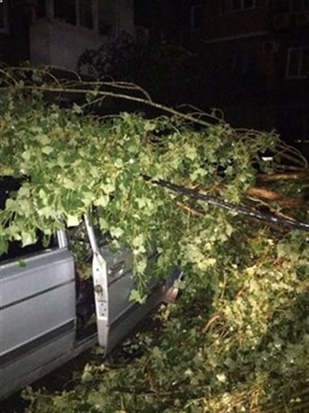 Вчера в Горловке целый день устраняли последствия проливного ливня. Повалено 30 деревьев