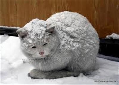 Накорми котов: горловский блогер подкармливает бездомных животных