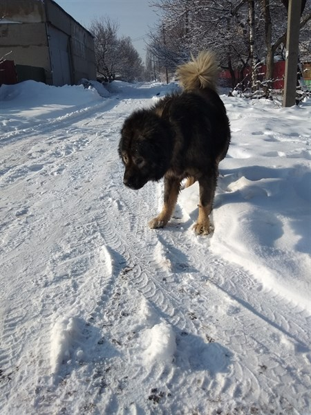 В Горловке разыскивают владельцев породистого пса. Есть опасения, что его хотят съесть алкоголики