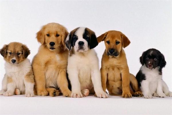Перевозка животных через линию разграничения: правила не регламентированы