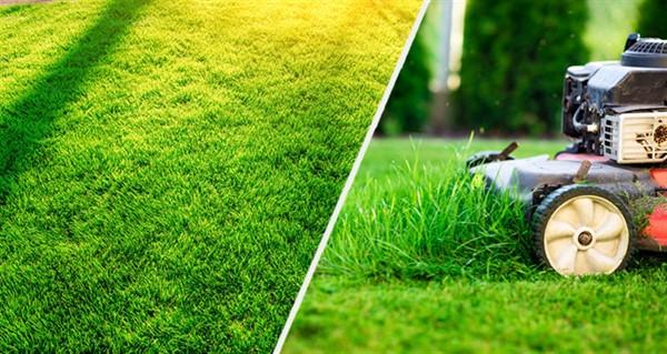 Рулонный газон. Как расстелить и ухаживать