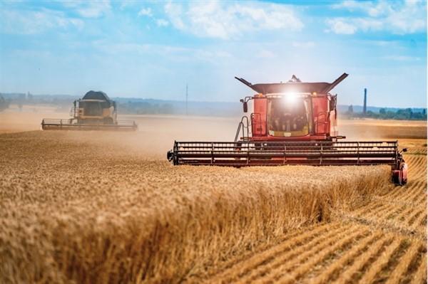 Власти Донецка заявили о росте производства в животноводстве. В 2025 году
