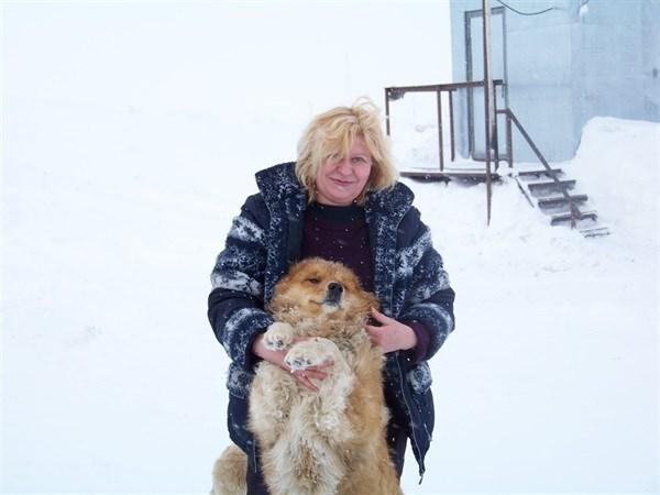 Вокруг света с Gorlovka.ua: Русское заполярье, где можно  приручить песца, наткнуться на белого медведя и отведать оленины,  глазами горловского гастарбайтера