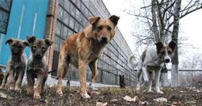 За два летних месяца в травмпункт обратились 55 горловчан, которых покусали собаки