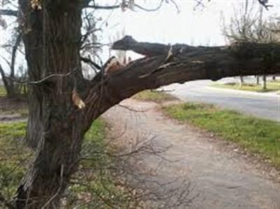 В Горловке рухнуло дерево на глазах у жителя, снимавшего видео