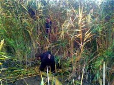Застрявший в ставке: в Горловке из камышей спасатели достали местного жителя
