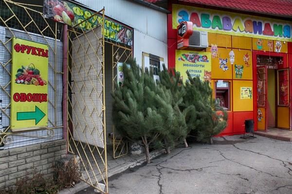 В Горловке начали работать елочные базары. Цены от тысячи рублей