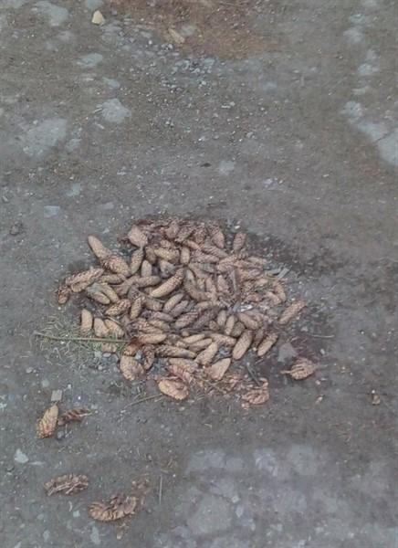 В Горловке яму на дороге залатали шишками (ФОТОФАКТ)