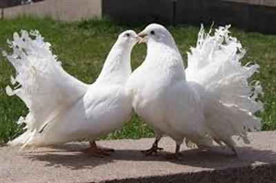 В Горловке прошла выставка-ярмарка голубей