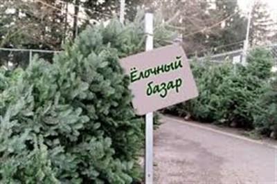 С 10 декабря в Горловке начнут работать елочные базары
