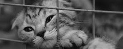 В Горловке разыскивают домашних любимцев: потерялся спаниель и британский кот