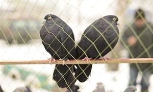 Выставка-ярмарка голубей, певчих и экзотических птиц в Горловке