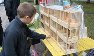В Горловке на Дне города выставляли напоказ голубей и экзотических птиц